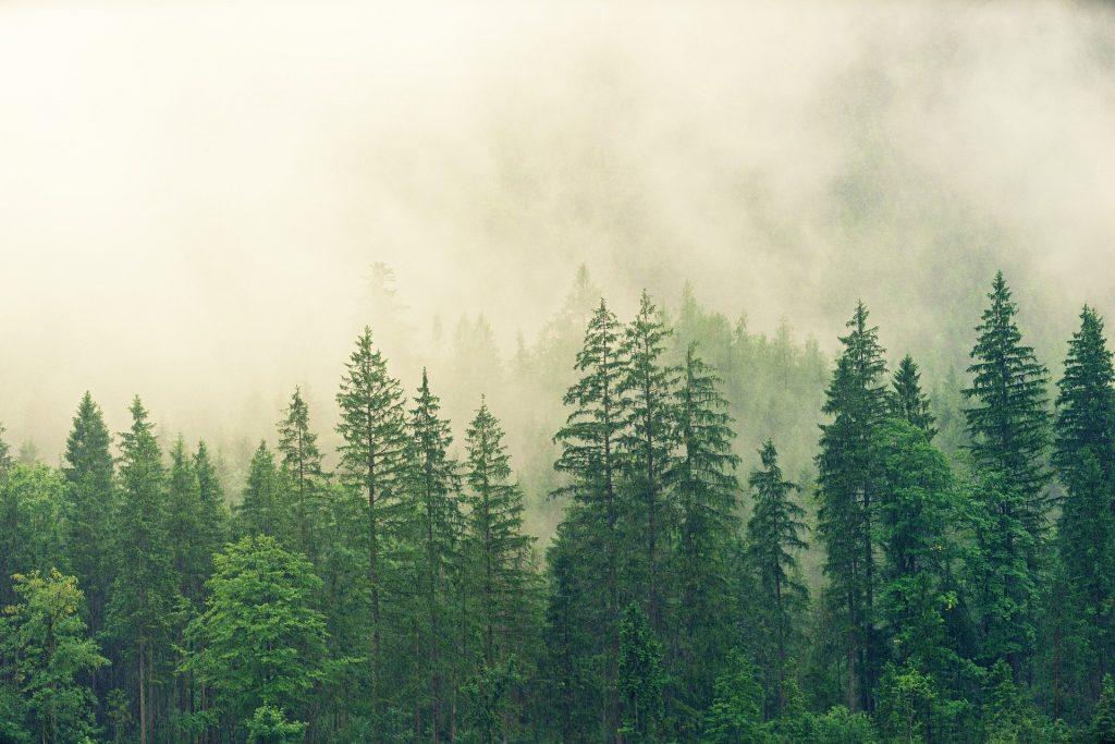 Regulasi tentang Lingkungan Hidup, Perlindungan lingkungan hidup, peraturan pemerintah tentang lingkungan, PP 22 tahun 2021, Ketentuan perlindungan lingkungan